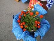 Делегация Усть-Качки презентовала сувенирную продукцию на конкурсе цветоводов.